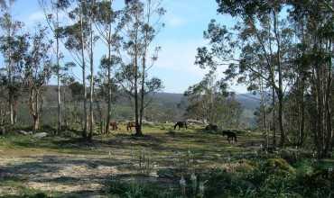 Monte de A Groba  - BAIONA